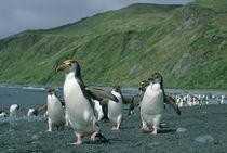 Sub-Antarctic Australia von Danita Delimont