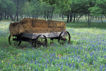 Old wagon in field of wildflowers by Danita Delimont