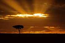 A mouth openning sunrise in the Maasai Mara Kenya by Danita Delimont