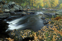 Autumn leaves at Packers Falls on the Lamprey River von Danita Delimont