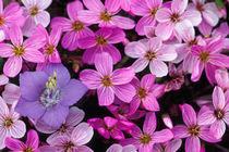Wildflowers by Danita Delimont