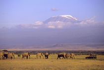 Elephants and safari vehicle with Mt Kilimanjaro in distance by Danita Delimont