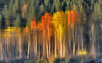 Fall colors reflect in the Williamson River in southern Oregon by Danita Delimont