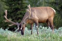 Wyoming von Danita Delimont