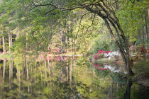 Trees and azaleas reflection in a lake by Danita Delimont