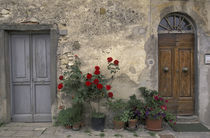 Tuscan doorway; Castellina in Chianti by Danita Delimont