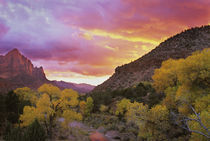 The Watchman in the distance with Virgin River in foreground reflecting a sunset sky by Danita Delimont