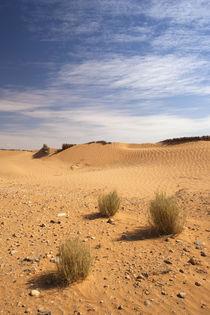 Sand dunes von Danita Delimont