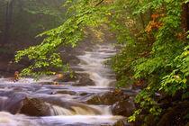 Flowing streams along the Appalachian Trail by Danita Delimont