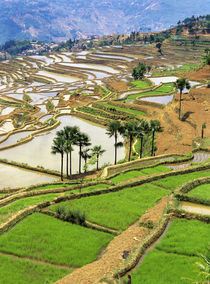 Rice terraces near Jiayin Village von Danita Delimont