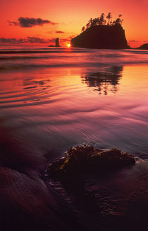 Sunset over sea stacks and seaweed on Second Beach by Danita Delimont
