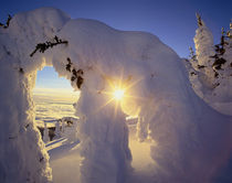 Sunset thru the Snowghosts at Big Mountain near Whitefish Montana von Danita Delimont