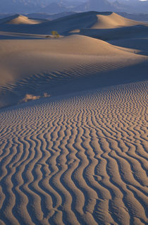Mesquite Flats sand dunes with wind ripples at sunrise von Danita Delimont