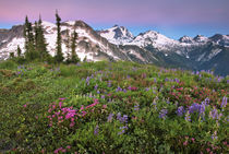 A brilliant field of alpine wildflowers by Danita Delimont