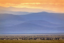 Tanzania by Danita Delimont
