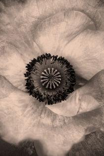 Sepia von Danita Delimont