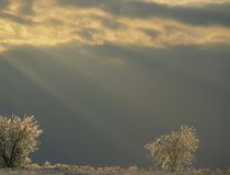 Small ice-covered trees and sunbeams von Danita Delimont