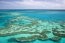 Aerial of the Great Barrier Reef by the Whitsunday Coast by Danita Delimont