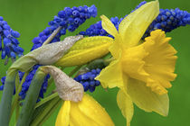 Detail of daffodil and hyacinth flowers by Danita Delimont