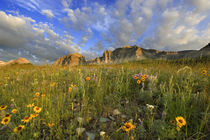 Prairie Wildflowers at Windy Creek in the Many Glacier Valley of Glacier National Park in Montana von Danita Delimont