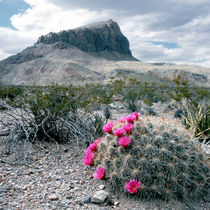 Situated in the north tip of the Chihuahuan Desert by Danita Delimont
