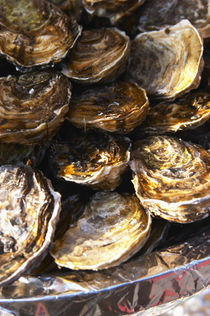 A plate of oysters by Danita Delimont