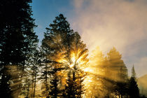 God Rays from morning fog along the Madison river in Yellowstone National Park by Danita Delimont