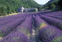 Lavander fields von Danita Delimont