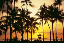Waikiki Oahu Hawaii by Danita Delimont