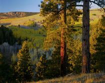 Dixie National Forest von Danita Delimont