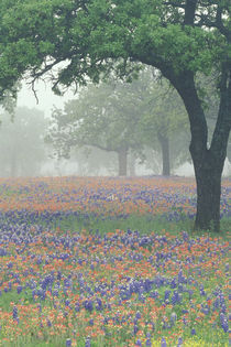 Foggy morning in the Texas Hill Country by Danita Delimont