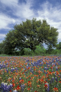 Texas Hill Country von Danita Delimont