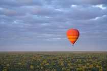 Dawn launch hotair baloon ride around Alice Springs von Danita Delimont