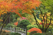 Wooden bridge and maple trees in autumn color at Portland Japanese Garden by Danita Delimont