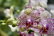 National Orchid Garden located within the Botanic Gardens by Danita Delimont