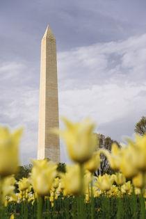 The Washington Monument as seen through yellow tulips von Danita Delimont