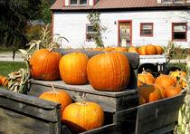 Pumpkins by Danita Delimont