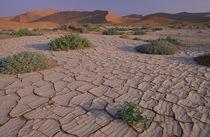 Dunes in back von Danita Delimont