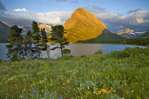Wildflowers along Swiftcurrent Lake in the Many Glacier Valley of Glacier National Park in Montana by Danita Delimont
