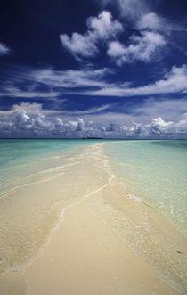 Beach in Palau von Danita Delimont