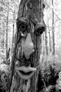 Tree troll on a Big Cypress tree by Danita Delimont