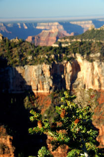 North Rim by Danita Delimont