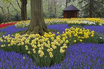 Holland von Danita Delimont