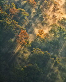 Sunrise lights fog-covered forest von Danita Delimont