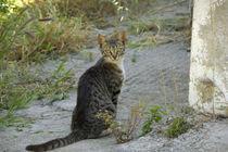 Cat von Danita Delimont