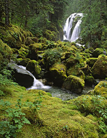 A waterfall and rain forest in Southeast Alaska by Danita Delimont