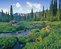 Picnic Creek in the Jewel Basin of the Swan mountain Range in Montana by Danita Delimont