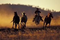 Cowboy and horses running PR (MR) by Danita Delimont