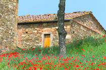 Abandoned villa in old vineyard with red poppies von Danita Delimont