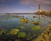 Faro stands guard as a beacon for navigation von Danita Delimont